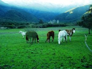 ggc horses